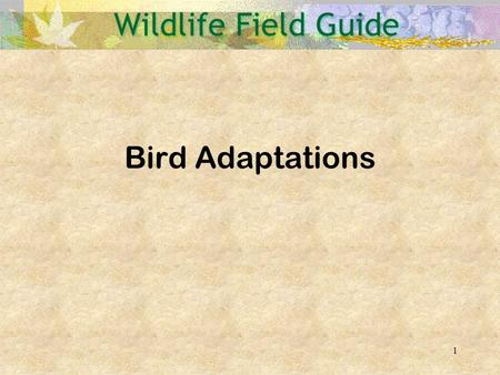Bird Adaptations.
