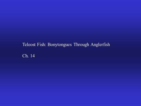 Teleost Fish: Bonytongues Through Anglerfish Ch. 14.
