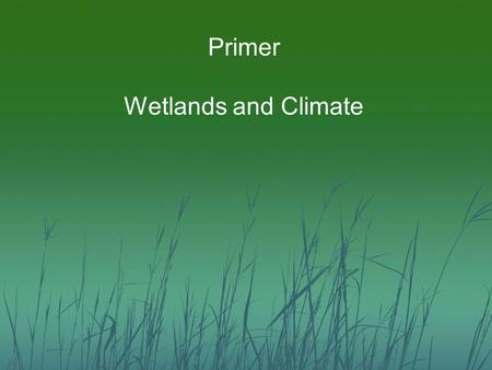 Primer Wetlands and Climate. Wetland Degradation and Loss Artificial drainage of wetlands and hydric soils Mechanical disturbance from agriculture Altered.