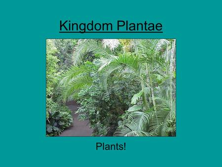 Kingdom Plantae Plants!. Plants Eukaryotic Multicellular Autotrophic (mostly) –Photosynthesis Alternation of Generations –Sporic Life Cycle –Gametophyte.
