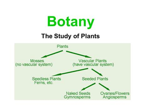 Botany The Study of Plants. Kingdom Plantae General Characteristics Contain Chlorophyll a Multicellular Made up of Eukaryotic Cells Photosynthetic Autotrophs.