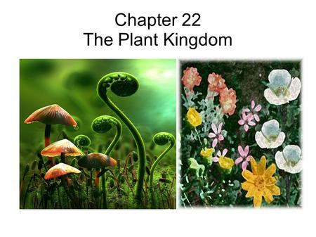 Chapter 22 The Plant Kingdom