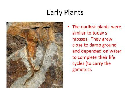 Early Plants The earliest plants were similar to today's mosses. They grew close to damp ground and depended on water to complete their life cycles (to.
