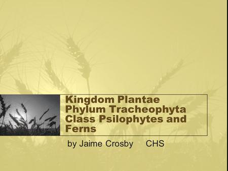 Kingdom Plantae Phylum Tracheophyta Class Psilophytes and Ferns