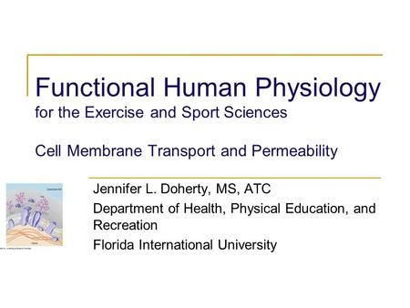 Functional Human Physiology for the Exercise and Sport Sciences Cell Membrane Transport and Permeability Jennifer L. Doherty, MS, ATC Department of Health,