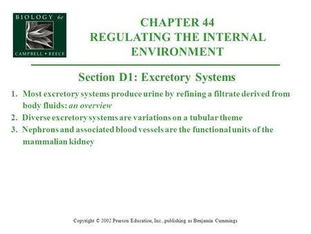 CHAPTER 44 REGULATING THE INTERNAL ENVIRONMENT Copyright © 2002 Pearson Education, Inc., publishing as Benjamin Cummings Section D1: Excretory Systems.