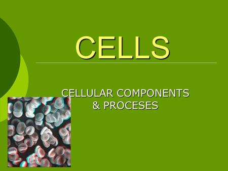 CELLULAR COMPONENTS & PROCESES