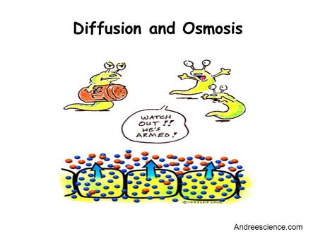 Diffusion and Osmosis Andreescience.com. Outline Learn the concepts of: –Passive Transport –Active Transport –Diffusion –Osmosis Observe Diffusion –How.