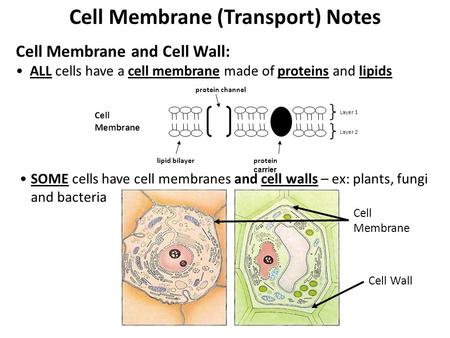Cell Membrane (Transport) Notes