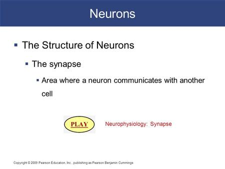 Neurons The Structure of Neurons The synapse