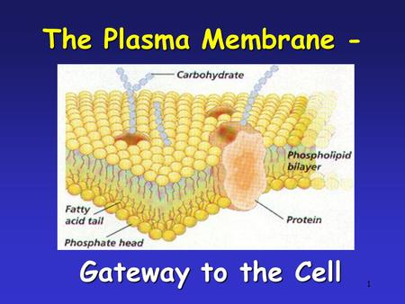 The Plasma Membrane - Gateway to the Cell
