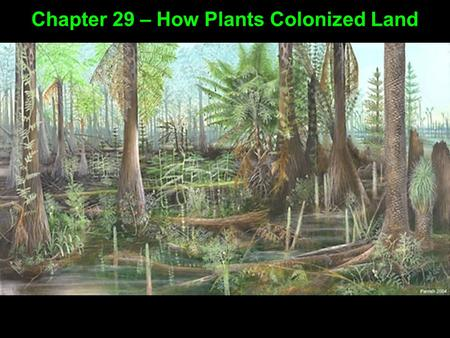 Chapter 29 – How Plants Colonized Land. Evidence suggests land plants evolved from green algae Chapter 29 – How Plants Colonized Land Rose-shaped complexes.