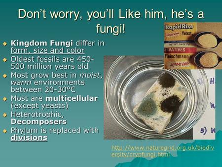 Don't worry, you'll Like him, he's a fungi!  Kingdom Fungi differ in form, size and color  Oldest fossils are 450- 500 million years old  Most grow.