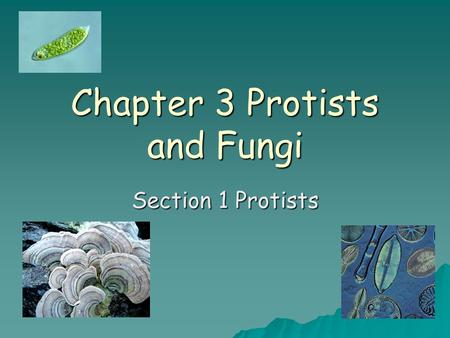 Chapter 3 Protists and Fungi
