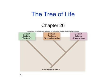 The Tree of Life Chapter 26 2 Why classify organisms? 1.Order and organization 2.Common names confusing Ex. Jellyfish, starfish, etc. 3.Common names.