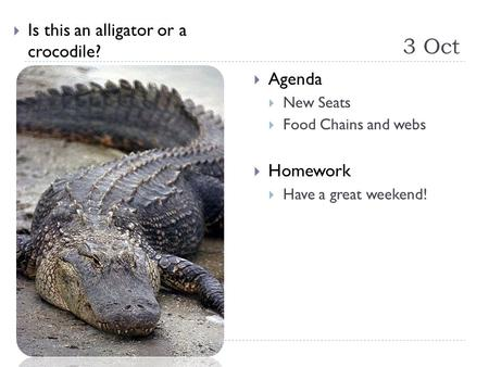 3 Oct  Is this an alligator or a crocodile?  Agenda  New Seats  Food Chains and webs  Homework  Have a great weekend!