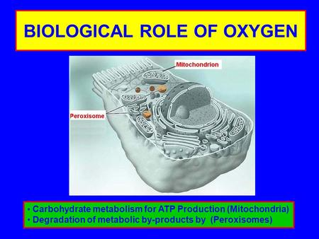 BIOLOGICAL ROLE OF OXYGEN