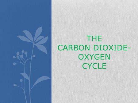 THE CARBON DIOXIDE- OXYGEN CYCLE. Do plants breath? Yes! Plants breath in carbon dioxide from the atmosphere!