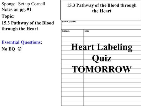 Heart Labeling Quiz TOMORROW