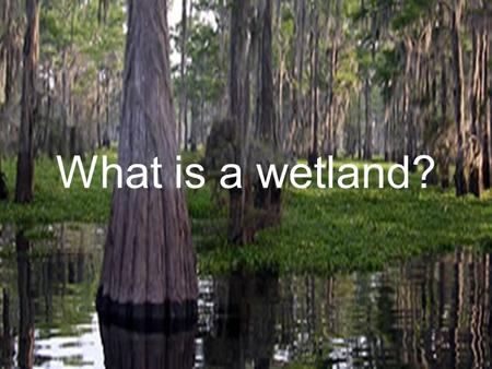What is a wetland?. Water Classification Wetlands are areas that are covered by water or have waterlogged soils for long periods during the growing season.