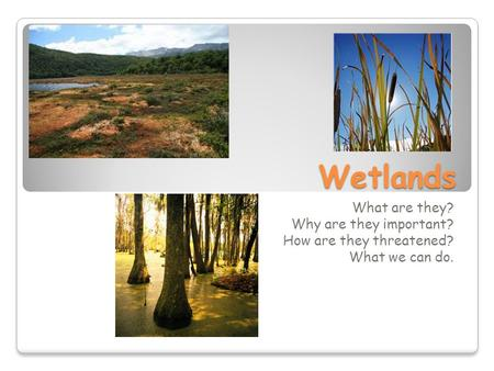 Wetlands What are they? Why are they important? How are they threatened? What we can do.