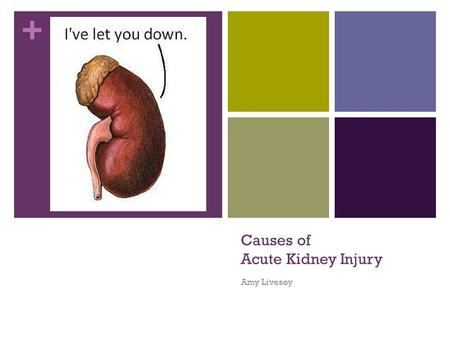 + Causes of Acute Kidney Injury Amy Livesey. + Overview Why Acute Kidney Injury? Definition Recap of types of AKI Causes of Acute Kidney Injury How to.