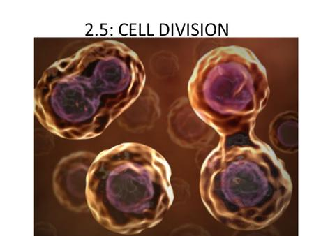 2.5: CELL DIVISION.