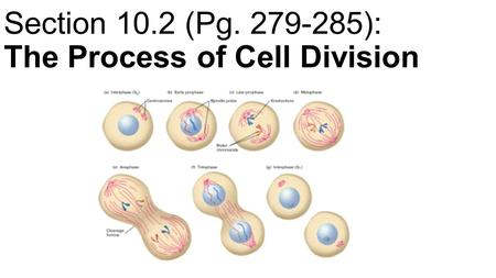 Section 10.2 (Pg ): The Process of Cell Division