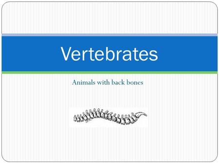 Animals with back bones Vertebrates. Fishes Three Classes or Groups Agnatha- Lampreys and Hagfishes Chondrichthyes- Sharks and rays, Chimera Osteichthyes-