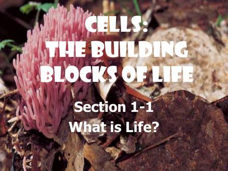 Cells: The Building Blocks of Life Section 1-1 What is Life?