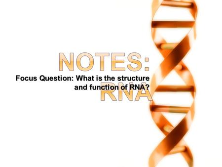 Focus Question: What is the structure and function of RNA?