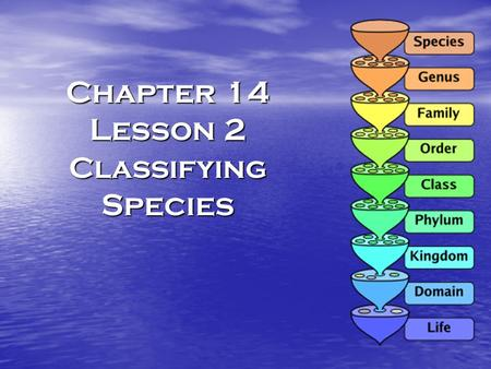Chapter 14 Lesson 2 Classifying Species. Classification grouping objects or organisms based on similarities grouping objects or organisms based on similarities.