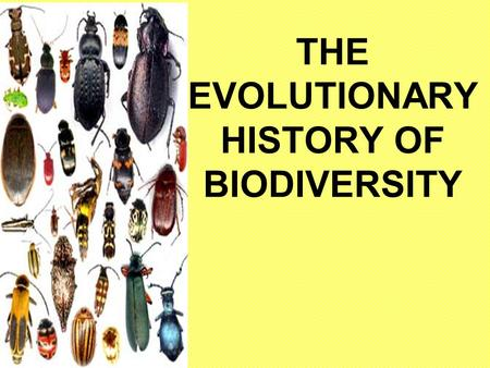 THE EVOLUTIONARY HISTORY OF BIODIVERSITY