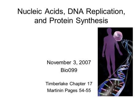 Nucleic Acids, DNA Replication, and Protein Synthesis