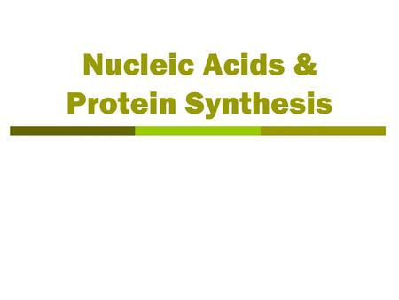 Nucleic Acids & Protein Synthesis