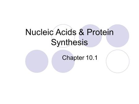 Nucleic Acids & Protein Synthesis Chapter 10.1. Structure of DNA Phosphate group Nitrogen-containing base Sugar (deoxyribose)