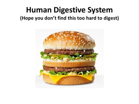 Human Digestive System (Hope you don't find this too hard to digest)