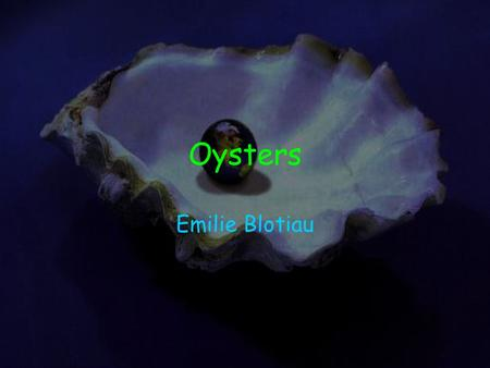Oysters Emilie Blotiau. Scientific Name Oysters scientific name is Crassostrea madrasensis.