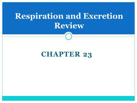 CHAPTER 23 Respiration and Excretion Review. Excretory System Many different chemical changes take place in cells.  As these changes take place waste.