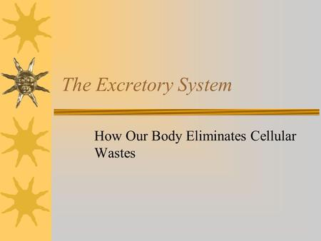 The Excretory System How Our Body Eliminates Cellular Wastes.
