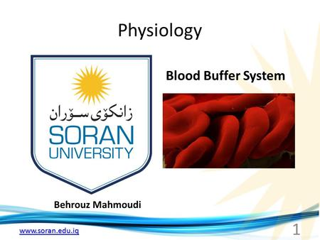Physiology Blood Buffer System Behrouz Mahmoudi.