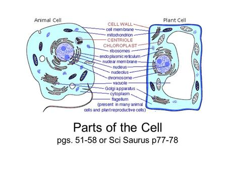 Parts of the Cell pgs or Sci Saurus p77-78