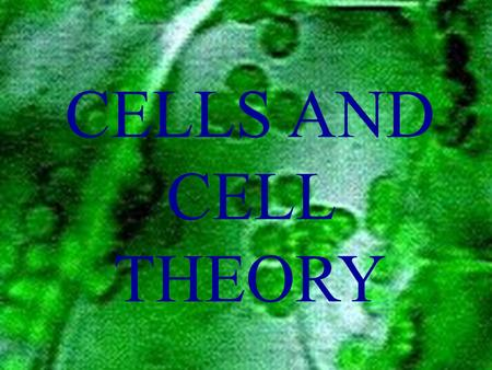 CELLS AND CELL THEORY. CELL SCIENTISTS Robert Hooke-1665, observed small cavities in cork which he called cells.
