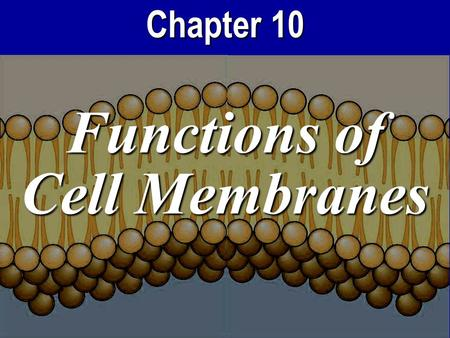 Chapter 10 Functions of Cell Membranes. Cell Membrane Functions 1.Selectively choose what's inside or outside the cell…creating a concentration gradient.