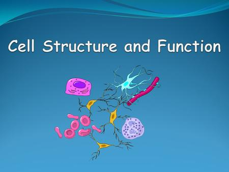 unit 5 p1 cell functions Unit 5 p1 the functions of the main cell components of the body cell 645 words | 3 pages the functions of the main cell components of the body cell.