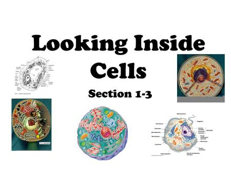 Looking Inside Cells Section 1-3.