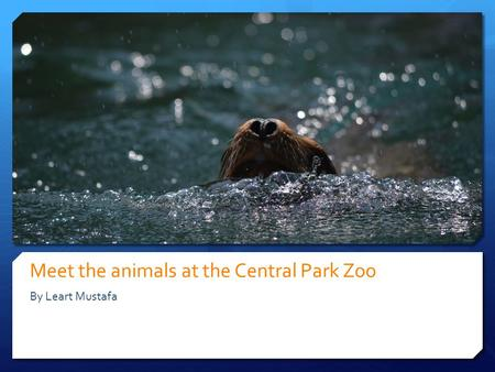 Meet the animals at the Central Park Zoo By Leart Mustafa.
