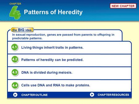 NEW CHAPTER Patterns of Heredity CHAPTER the BIG idea In sexual reproduction, genes are passed from parents to offspring in predictable patterns. Living.