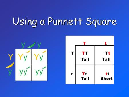 Using a Punnett Square.