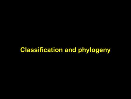 Classification and phylogeny. Early classification schemes Fish & whales Flies & birds Frogs & alligators Squirrels & monkeys.